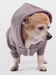 Doggy Hoodies